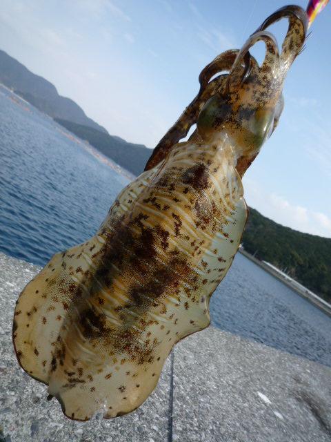 【知らなきゃ損する!】永久保存版 熊本エギング 釣れるポイント紹介 下島東側周辺編