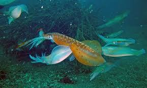 【知らなきゃ損する!】永久保存版 鹿児島エギング 釣れるポイント紹介 川内周辺