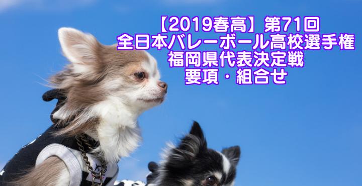 【2019春高】第71回全日本バレーボール高校選手権 福岡県代表決定戦 要項・組合せ