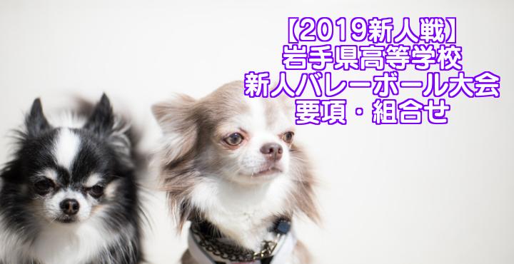 【2019新人戦】岩手県高等学校新人バレーボール大会 要項・組合せ