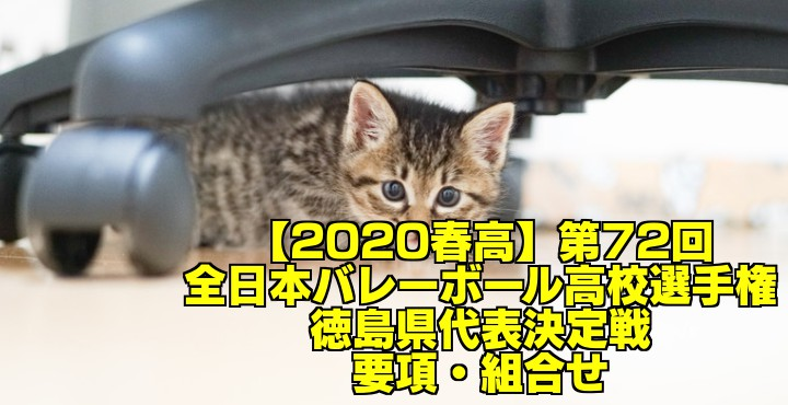 【2020春高】第72回全日本バレーボール高校選手権 徳島県代表決定戦 要項・組合せ