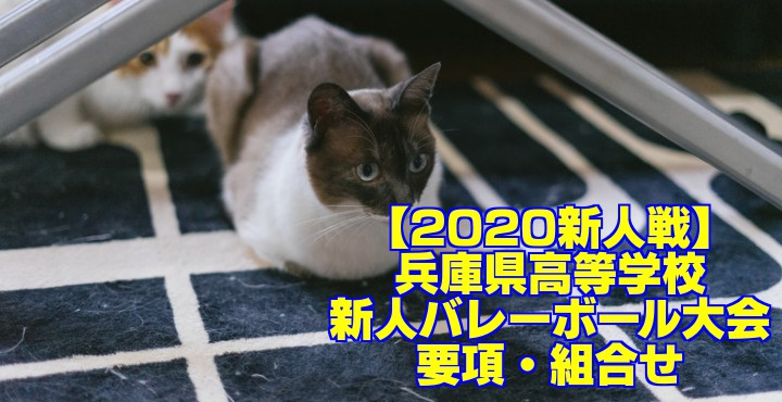 【2020新人戦】兵庫県高等学校新人バレーボール大会 要項・組合せ