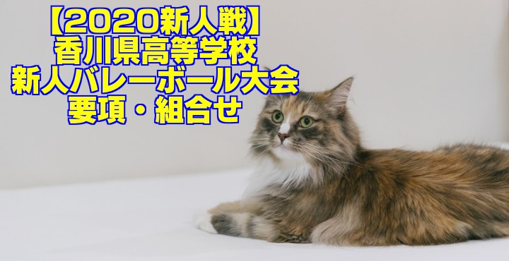 【2020新人戦】香川県高等学校新人バレーボール大会 要項・組合せ